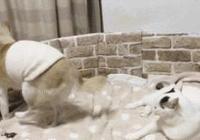 六年如一日照顧患有老年痴呆的狗狗 這些瞬間 人都做不到