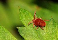 紅蜘蛛殺不死,看看這幾點,做好才能養花杜絕紅蜘蛛!