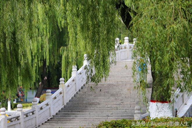 國慶中秋假期賞秋去哪裡?秋景就在你家門口——西寧人民公園秋色