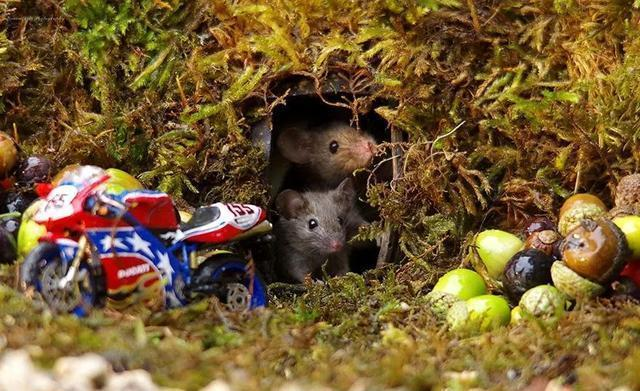 家裡後院發現了一窩老鼠,這哥們沒有找來耗子藥,反而給它們做了間豪宅……