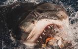 攝影師冒著生命危險拍攝的大白鯊