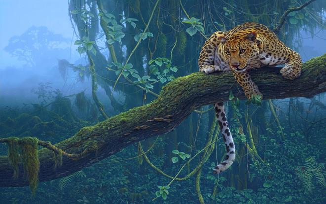 動物圖集:機靈的動物