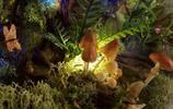 一個媽媽給孩子做的《幽靈公主》透明玻璃森林世界