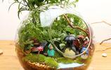 人們喜愛桌上擺放各樣的綠色植物,但你知道盆栽的風水位置嗎?
