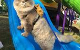 我是胖貓,目空一切的胖貓大王!