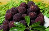 建議家有空地:定要種上這幾樣水果, 易成活,當年結果吃不完
