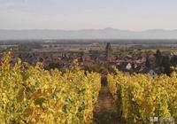 法國葡萄酒產區第三課:阿爾薩斯葡萄酒產區!