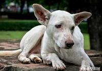 農家狗狗壽命只有12年在狗狗壽命快要結束最後一刻為什麼要選擇離開主人?