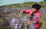吃花的季節到了,河南大姐用這種花做蒸菜,比槐花還好吃