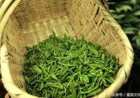 河南信陽毛尖 信陽毛尖是什麼茶?