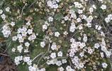 青藏高原上的花朵你見過嗎?有一種花這一生都難見到
