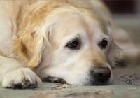 狗狗的6大肢體語言,你真的讀懂了嗎?