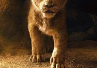 真人版的《獅子王》和動畫版的《獅子王》,你覺得哪個版本是你心中的獅子王呢?