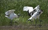 遼河口國家級自然保護區,鳥類與溼地形成一幅幅美麗畫卷