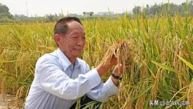 88歲袁隆平把非洲水稻雜交後從原來每公傾3噸提高到10.8噸。你怎麼評價?