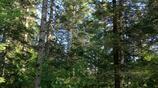 地下森林蘊藏在長白山北坡斷陷的溝谷中,植被繁茂、溪流湍急