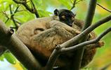 遊在四方:馬達加斯加,人與自然的和諧