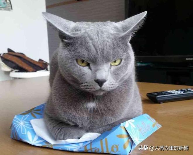"""""""來啦老弟,今天又給我弄啥好吃的"""",10張有趣貓咪圖逗你笑一笑"""