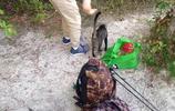 國外父子野營偶遇一隻貓,好心餵食,第二天收穫了一窩貓,暖心