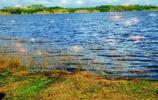 老王遊記 特多卡羅尼沼澤國家公園是觀賞朱鷺和紅樹林的最佳地點