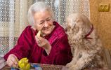 這8種狗狗超容易養,連老人家都能養,特別是最後這種狗!