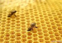 天然蜂蠟潤脣膏能不能用?