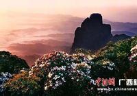 廣西來賓金秀縣將舉辦杜鵑花旅遊文化節