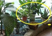 家中這三個地方萬萬要擺上植物,再窮也能變富有,有錢人都這麼做