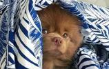 男子養了這樣一隻萌寵狗狗,鄰居卻嚇得要報警,網友:這是一頭熊