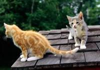 """貓咪離家出走尋找伴侶,兩個月回來後,卻生了一窩""""醜貓""""!"""
