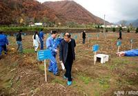 陝西略陽縣建黃精、天麻、豬苓基地1.3萬畝,年收入2.3億