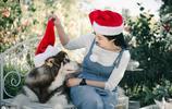 雪橇三傻之阿拉斯加雪橇犬