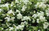 10種爬藤花卉,現在種上,明年陽臺瞬間變成小花園