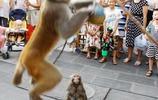 悟空不取經上街演猴戲,孩子看得高興卻遭家長抑制,說好的等西天取經回來呢?大聖快來救救你的猴子猴孫!
