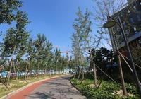 北京馬連窪建成濱河綠地休閒帶 改造前全是垃圾和違建