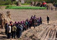 實拍藏族莊稼地辦酒席,藏族美女端盤子洗碗