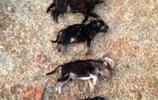 土牆倒塌7只小奶狗被埋,狗媽媽傷心度後:媽媽來陪你了!淚奔