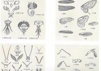 工筆百蟲圖譜