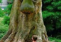 怪樹!怪樹!怪樹!怪樹!怪樹!怪樹!怪樹!怪樹!