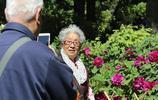北京景山公園牡丹花卉藝術節開幕 吸引眾多市民拍照觀賞