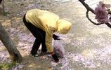 公園櫻花樹林中撿了幾捧掉落的櫻花,帶回家秒變十二個生肖動物