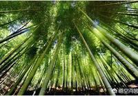 高山上的毛竹是如何運下山的?