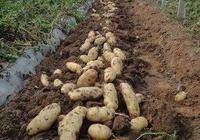 農產品有什麼好的銷售模式,即能解決農產品滯銷又能降低農產品費用?