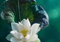 悟禪心語:最經典的9句佛教禪語!