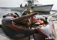 這麼多種龍蝦,你吃的是哪一種?