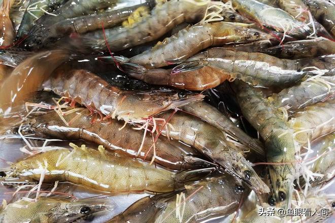 酒店帶魚268一斤,菜市場便宜只要15,梭子蟹長大點50一斤