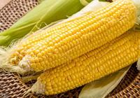 11月30日玉米市場:任憑關內糧價跌,東北深加工提價依舊歡