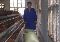 想回鄉養雞創業,進來看看就知道,開養殖場是什麼樣的體驗了