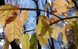 秋葉童話,美麗的景色都是在秋天誕生的,吉林市的秋天很美!