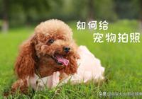 想留住寵物最可愛的瞬間, 一定要了解這些攝影常識!
